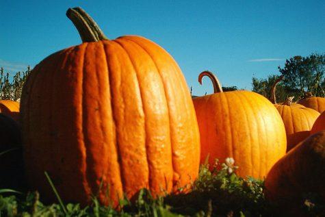 Top 5 Fall Festivities